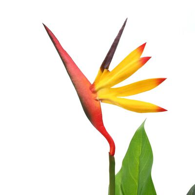 vidaXL műnövény 66 cm pompás papagájvirág
